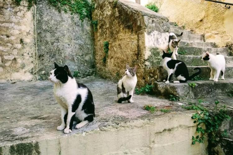 Cats of Nafplio, Greece