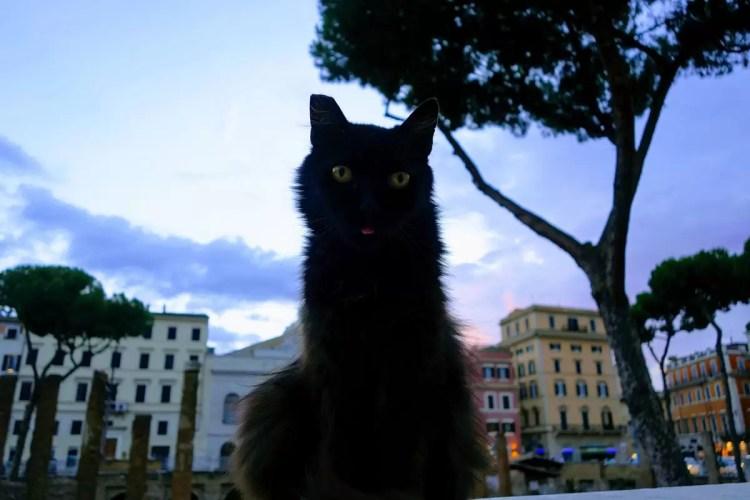 Torre Argentina Cat Sanctuary Rome
