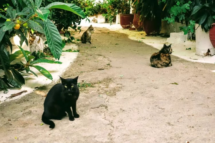 Cats of Anafiotika, Athens