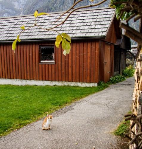 Austrian Cat