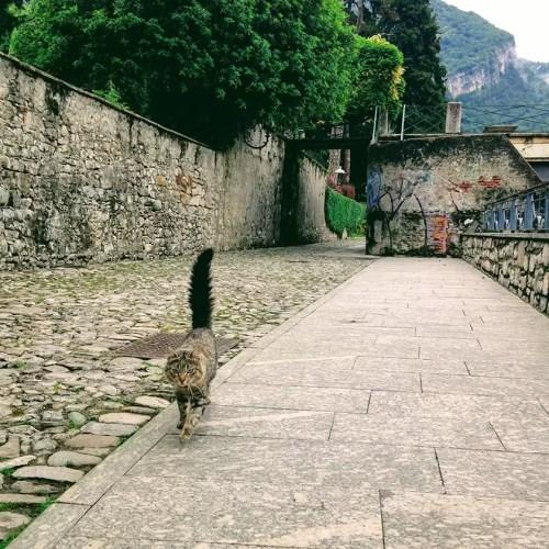 Lake Como cat