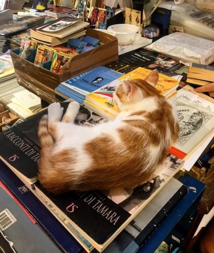 Venice Cat at Libreria Acqua Alta