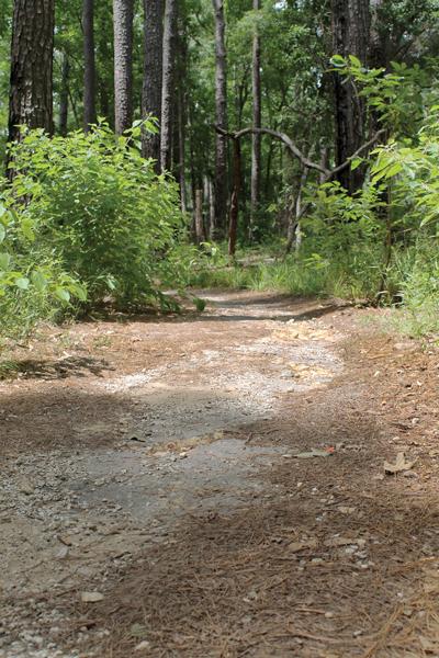 Fun-Trail-1
