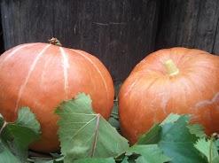 Umbria pumpkins - fall
