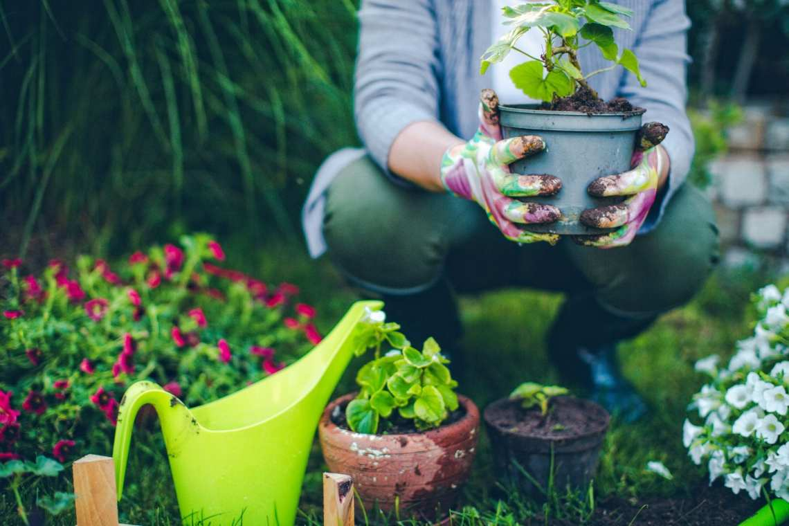 Our Favorite Poems About Gardening Postconsumers