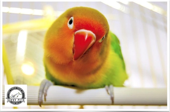 Birds For Sale. | free Classified | Free Advertising | free classified ads