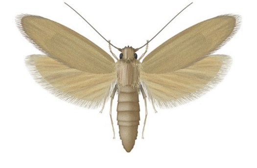 Pest Control Service in Gurgaon   free Classified   Free Advertising   free classified ads