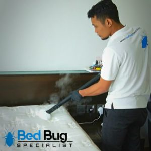 Bed Bugs Singapore   free Classified   Free Advertising   free classified ads