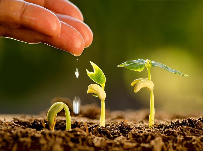 Postgraduate Programs in Agriculture