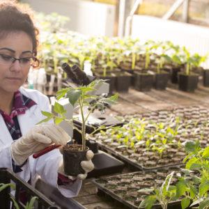 Postgraduate Horticulture Courses