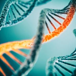 Postdoctoral Researcher in Molecular Biology & Postdoctoral Researcher in Metagenomics