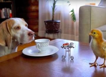 Tea Party για τον σκύλο και το κοτοπουλάκι