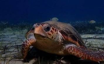 Νάξος: Μία μικρή πατρίδα για τις χελώνες caretta caretta