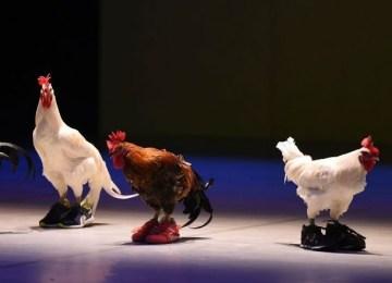 """""""Δεν είναι τέχνη η κακοποίηση ζώων"""" – Ξέσπασμα ζωόφιλων για παράσταση του Φεστιβάλ Αθηνών"""