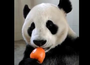 Γρανίτα καρότου για το χαριτωμένο panda