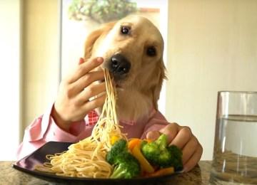 Ο σκύλος – σεφ απολαμβάνει σπαγγέτι με λαχανικά