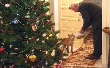 Η αλεπού των Χριστουγέννων (ένα αληθινό παραμύθι)