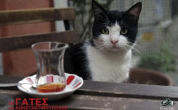 Cinema: Οι γάτες της Κωνσταντινούπολης