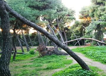 Ο Αλί από το Πεδίον του Άρεως μετακόμισε στο Άλσος Ευελπίδων…
