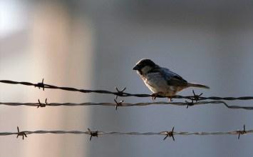Η ζωή μετά τη φυλακή και οι προσπάθειες του Ονήσιμου να σταματήσει τον φαύλο κύκλο της παρανομίας