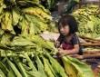 Παιδική εργασία – Child employment & Child labour