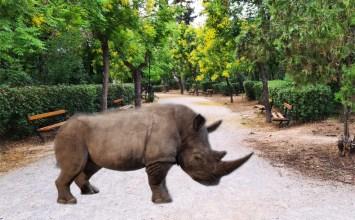 H Στέγη Ωνάση στο Πεδίον του Άρεως με ρινόκερους, 3D γλυπτά και… ασφάλεια με ποδήλατα