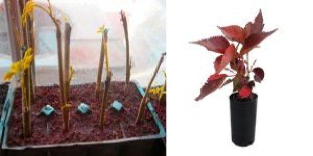 نباتات الصالون