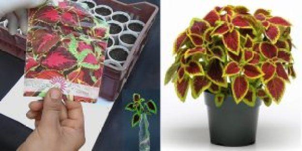 زراعة نباتات الزينة