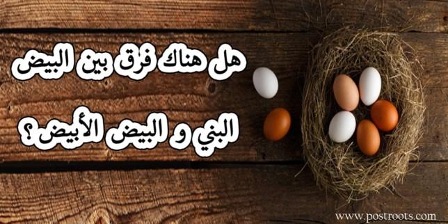 هل هناك فرق بين البيض البني والبيض الأبيض ؟