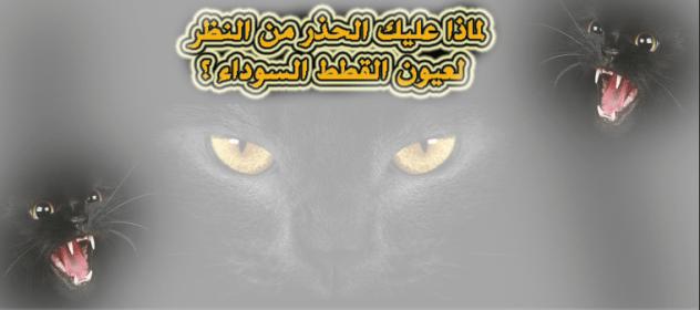 لماذا عليك الحذر من النظر لعيون القطط السوداء ؟