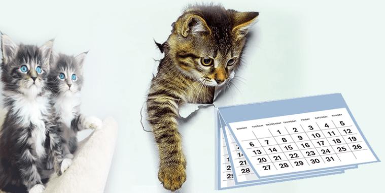 عمر القطط  المناسب للتزاوج