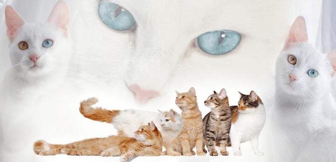 أنواع القطط في العالم