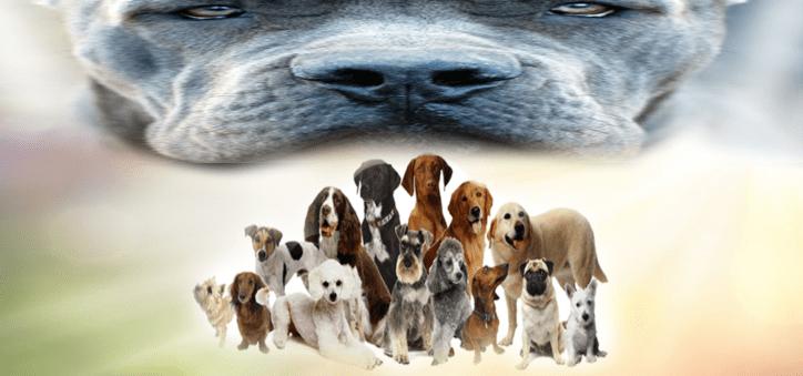 أنواع الكلاب في العالم