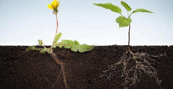 """""""هنا"""" ما جزء النبات المسؤول عن امتصاص الماء والاملاح من التربه"""