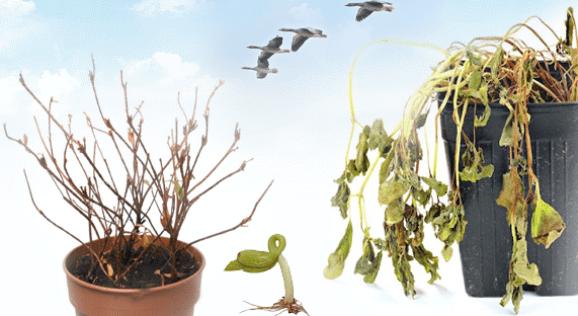 لماذا تموت النباتات بعد شرائها من المشتل