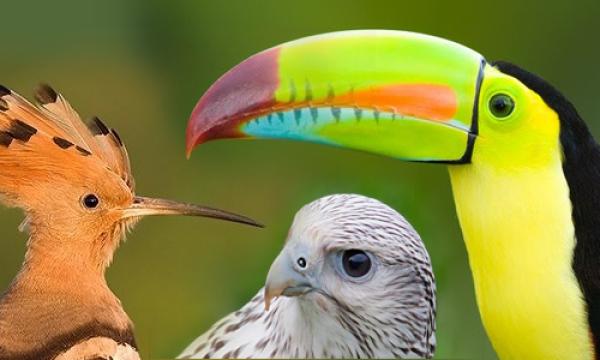 أسباب اختلاف مناقير الطيور