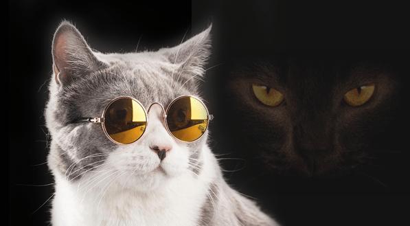 أهمية أشواك قضيب القط