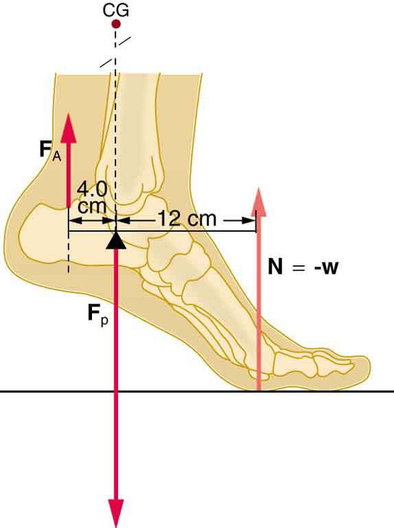 Piede e Postura 8