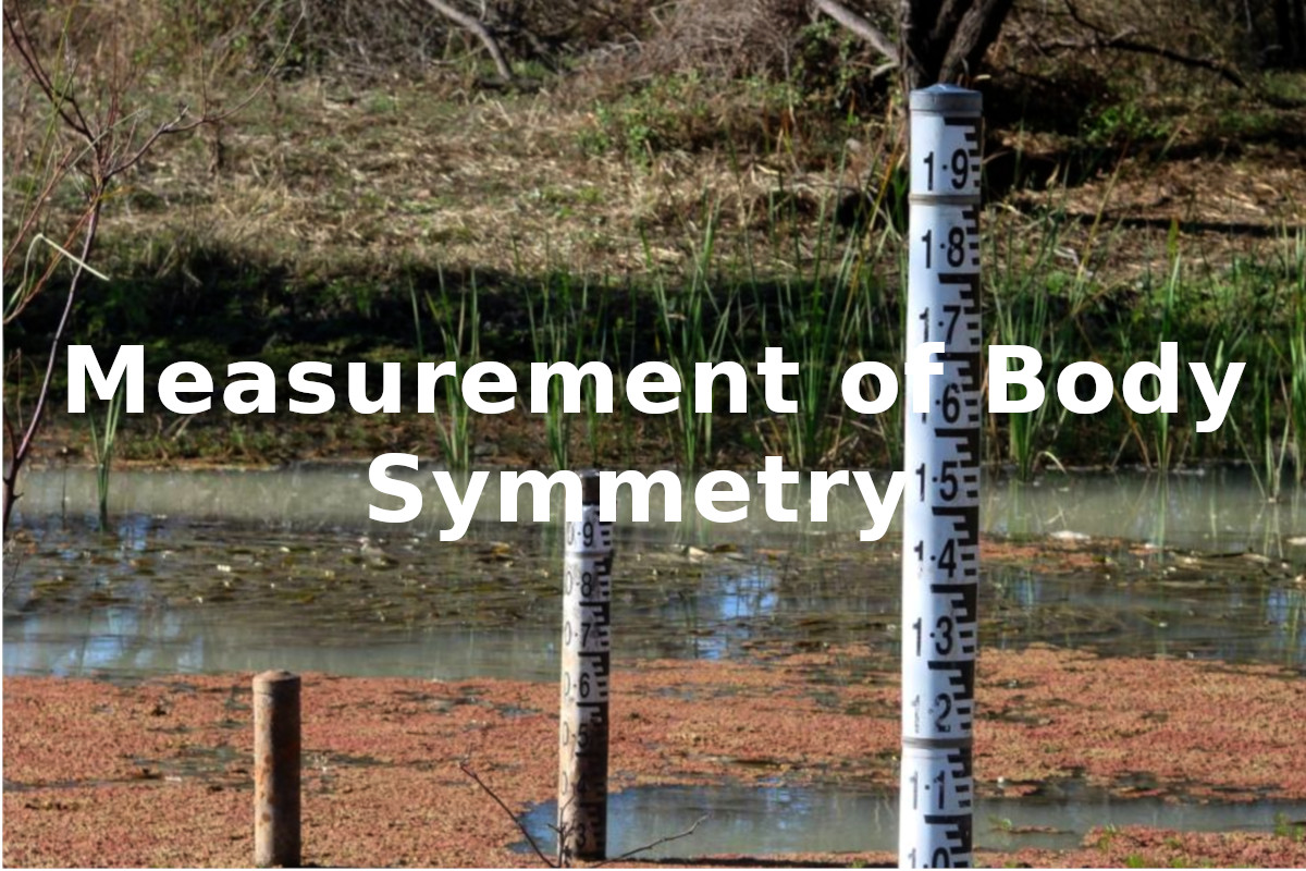 Measurement of body symmetry banner