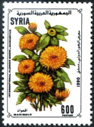 Postzegel Marigold