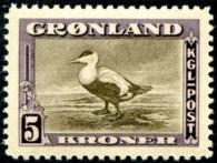 eidereend-5-kr-871-195p.jpg