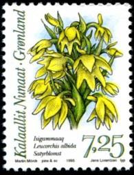 orchidee-725-kr-876-195p.jpg