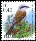 16-040-vogels-2000-914-125.jpg
