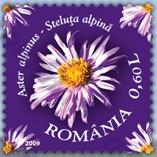 flora_roemenie_2009_poststamp_alpen_aster