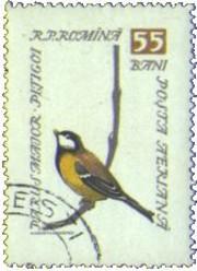 8 postzegel koolmees Parus major Roemenië 1959