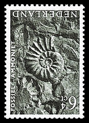NVPH 767 - Zomerzegel 1962 - Fossiel Ammoniet