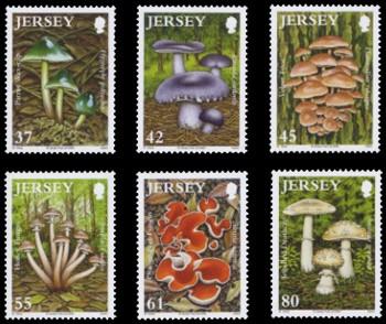 jersey-fungi