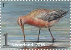 Griend-vogels-van-het-wad-roze-grutto