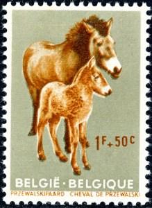 belgie-1183