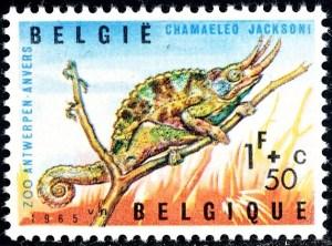 belgie-1344